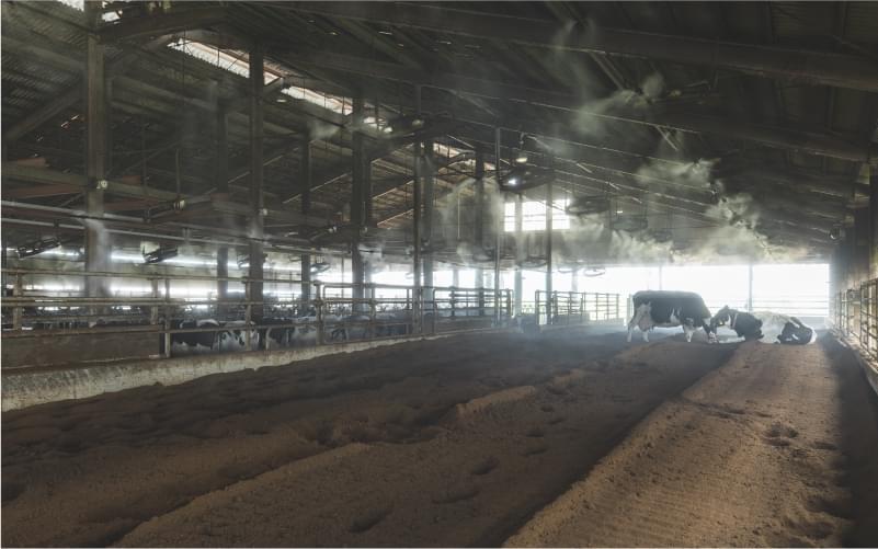 牛にも環境にもやさしいコンポストバーン牛舎
