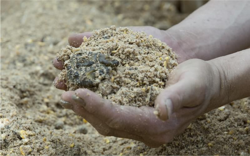 健やかな牛を育むNon-GMO飼料