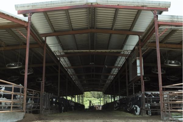 フリーストール牛舎